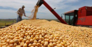Sin glifosato en Gualeguaychú, ¿qué destino tendrá el fondo de la soja?