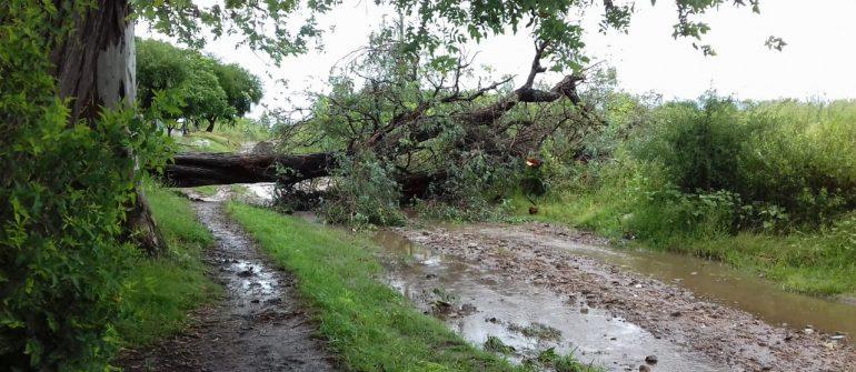 Las consecuencias del temporal. GALERÍA DE FOTOS